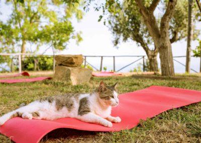 Casale Santa Rosalia: Yoga al tramonto